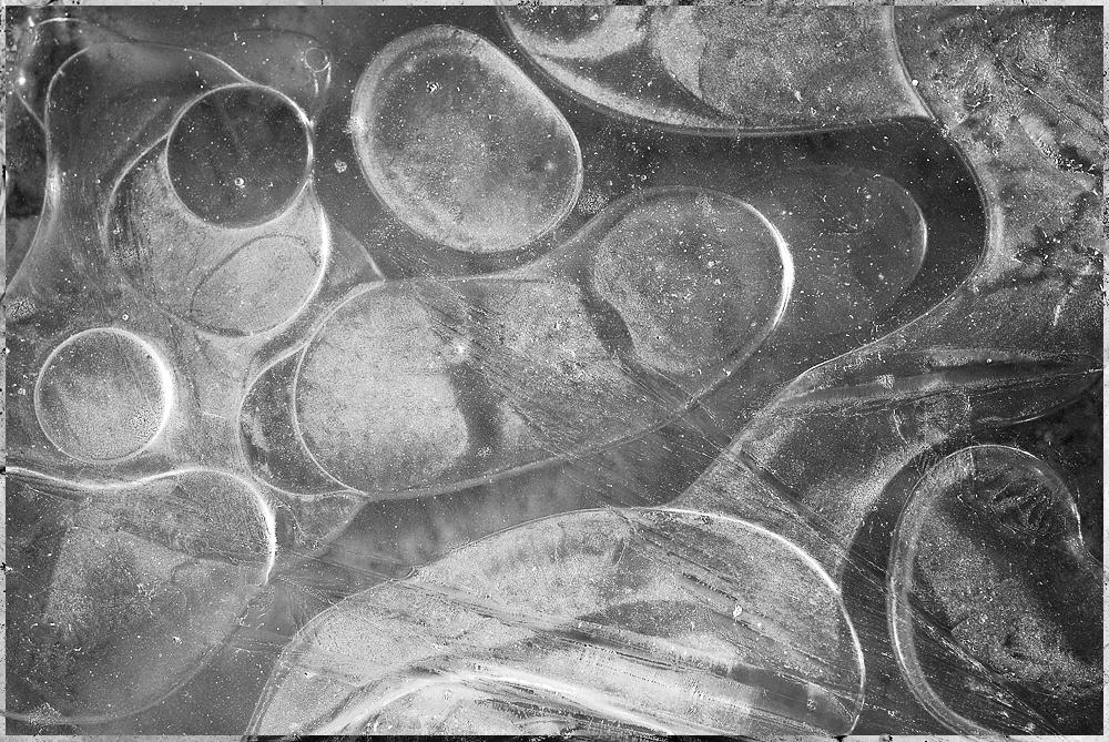 Frozen puddle looking like amoebas