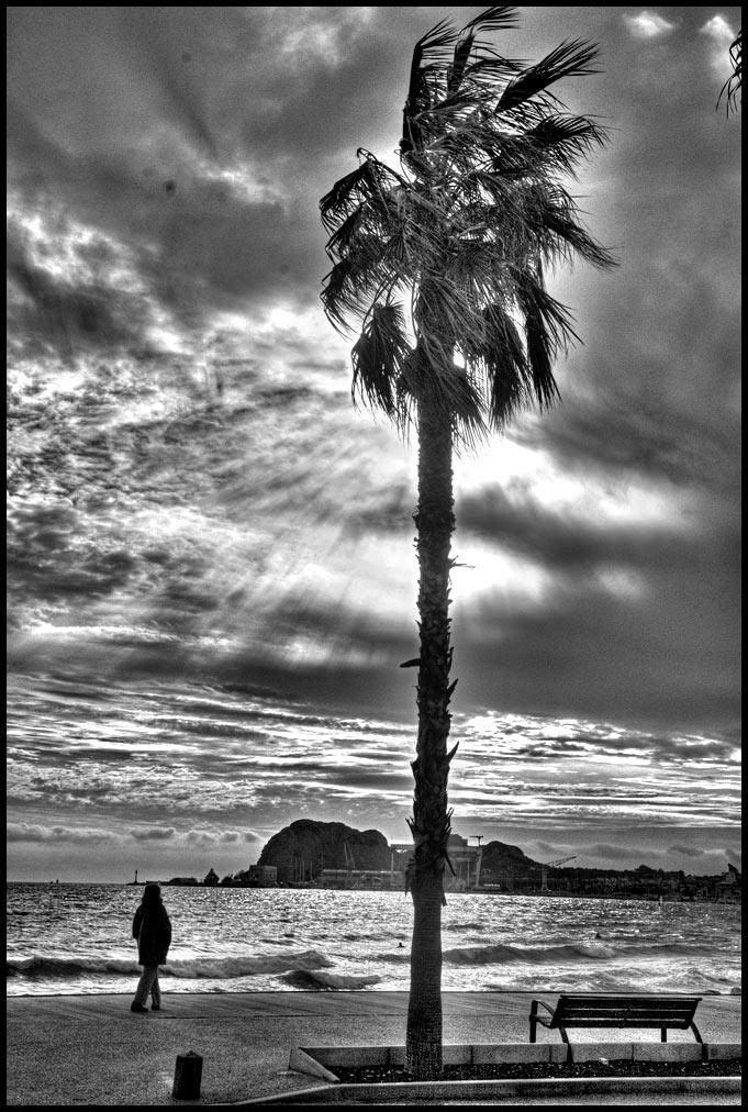 Un palmier photographié en noir et blanc sur la plage de La Ciotat