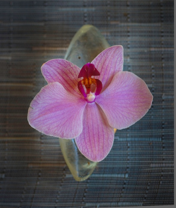 A photograph of a pink orchid taken using a Sony NEX-5N and Leica Summicron 50