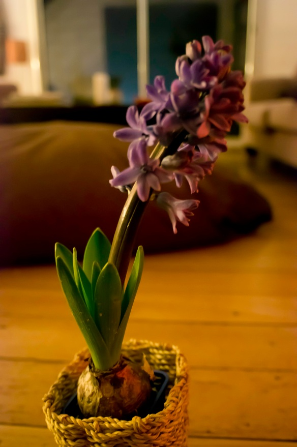 A photo of a flower in darkness by the Sony NEX-5N at ISO6400