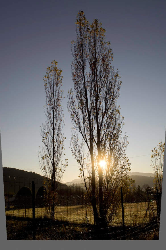 A photo of two poplars against the rising sun, by the Sony NEX-5N and Leica Elmarit-R 19/2.8