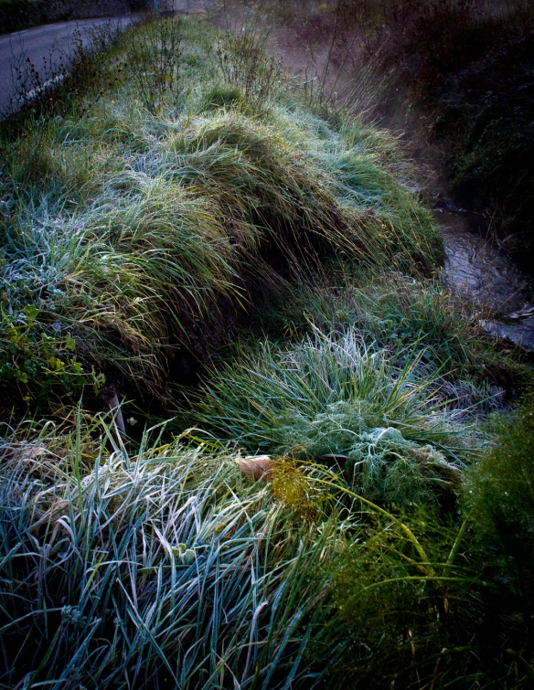 A manipulated photograph of a grassy brook by a Sony NEX-5N