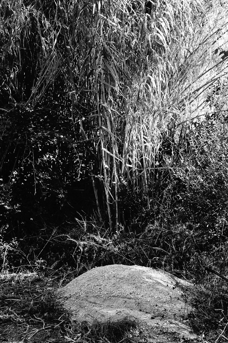 A pile of rubble in a garden shot in B&W by the Sony NEX-5N