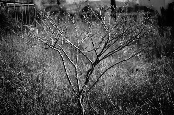 A photograph of a paper tree made by the Sony NEX-5N camera