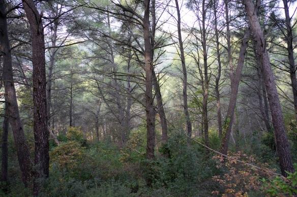 A forest in slight mist, Sony NEX-5N & Zeiss ZM Biogon 25mm/2.8
