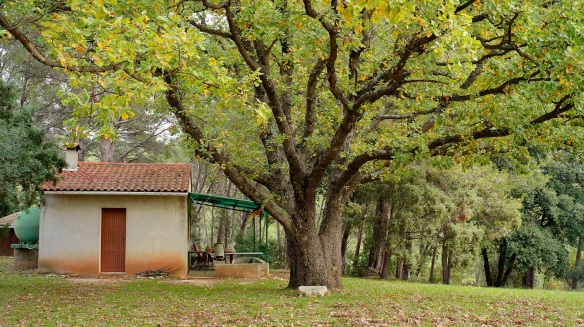 A little house under a tree, Sony NEX-5N and Zeiss ZM Biogon 25