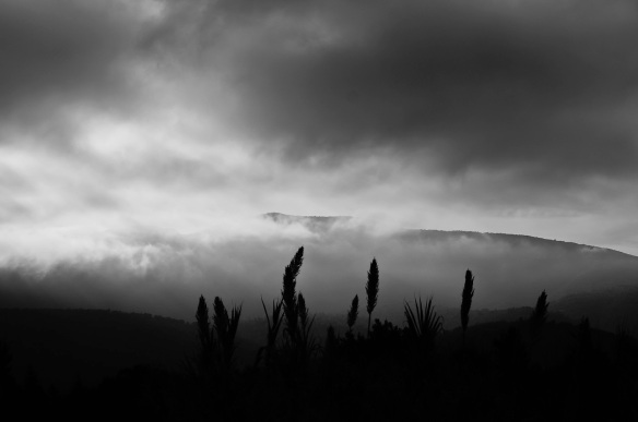 Canes and moutain, Sony NEX-5N & Leica Summicron-R 50