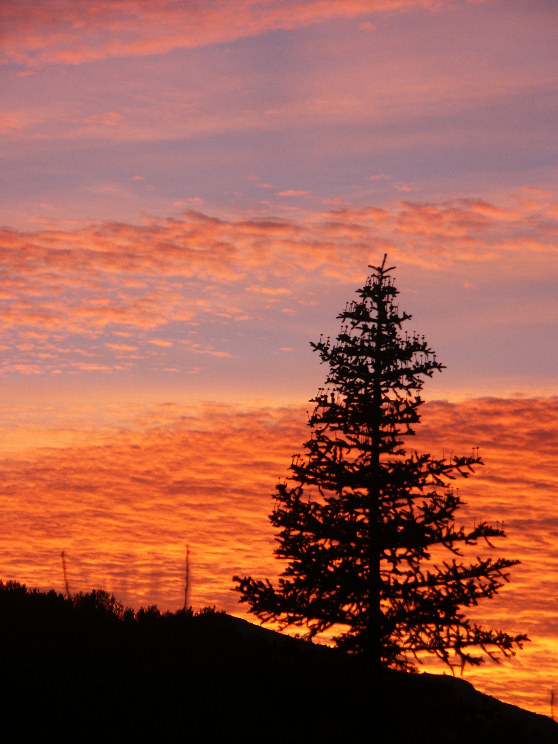 A picture of a lone pine at sunset with a Sony NEX 5N camera and leica lens