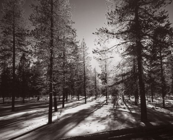 B&w photograph of a forest in Lapland made with a Mamiya 7