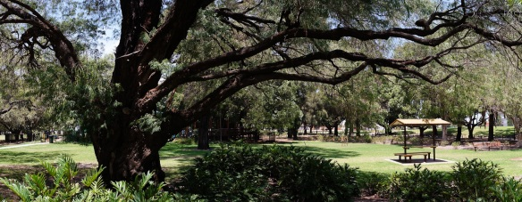 A huge tree shelters a picnic area in Subiaco park, Perth. Panorama using the Sony NEX-5N and Zeiss ZM Biogon 25/2.8
