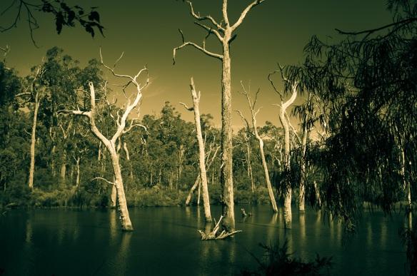 Dead trees in a lake, Margaret River, WA. Sony NEX-5n