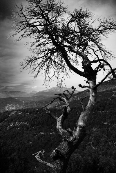 A twisted tree reaching for the sky in Bargeme, France. Sony NEX-5n