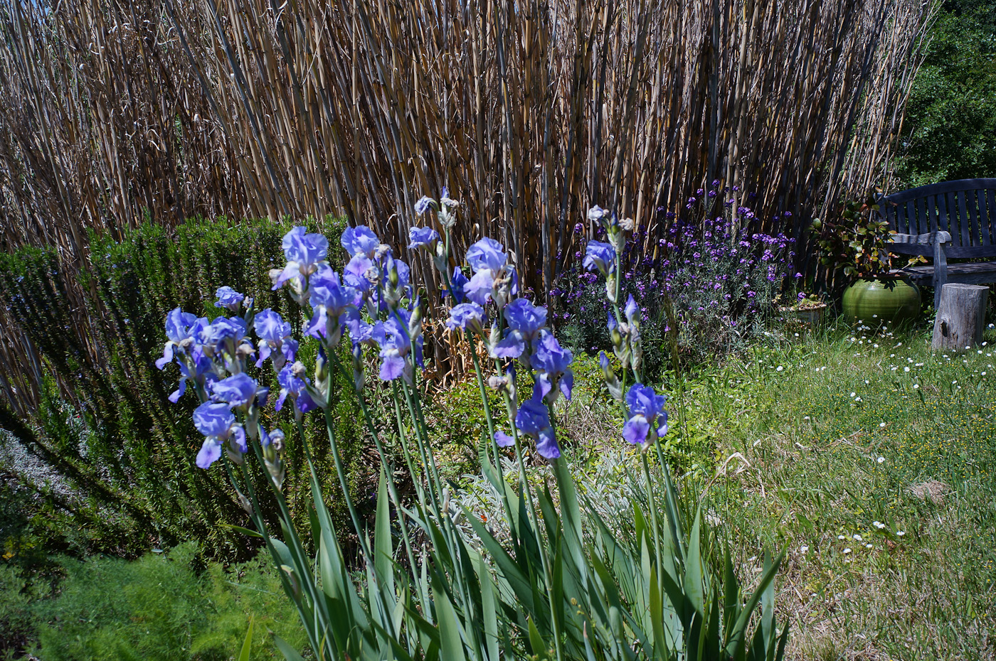 An Iris patch with the Sony NEX-5n