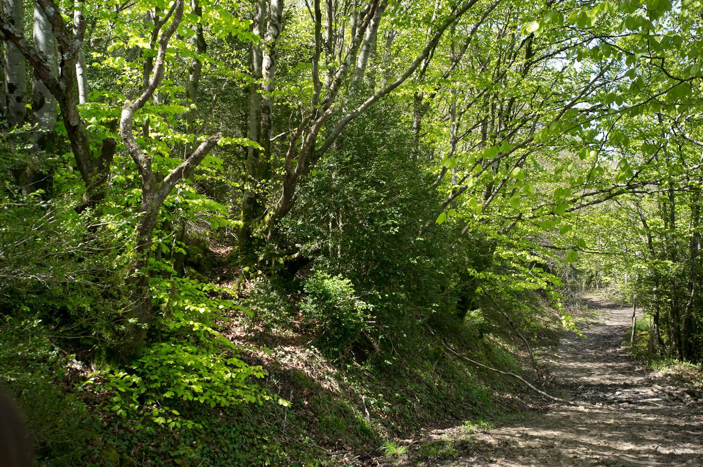 Walking through Bugarach's woodland