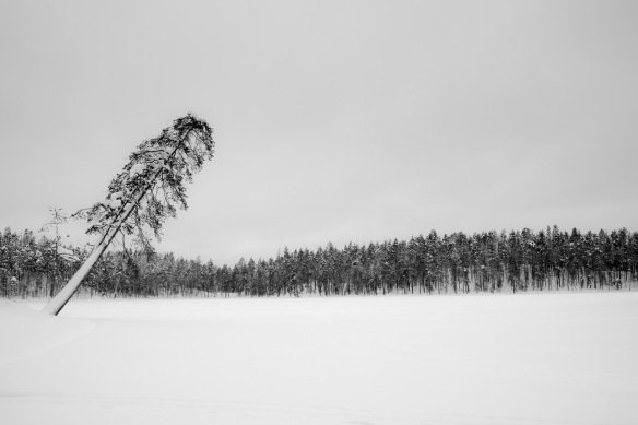 A tree leans towards a frozen lake in Lapland. Nikon D800e and Leica Summicron-R 35mm
