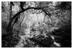Les Encaneaux, near Marseilles. Nikon D800e & Zeiss ZF2 Distagon 25mm. Processed with LightRoom and Silver Efex