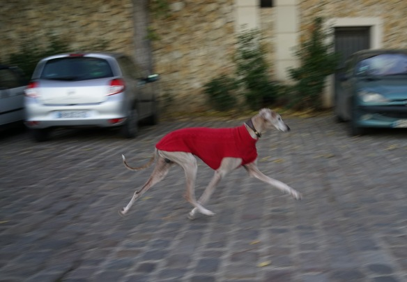 A greyhound dressed in a red runs along the seine river in Paris. Sony A7r & Sonnar 35/2.8 ZA