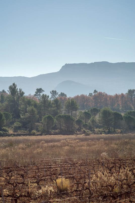 Sainte Baume fall colours - Sony A7r & Leica Elmarit-M 90mm